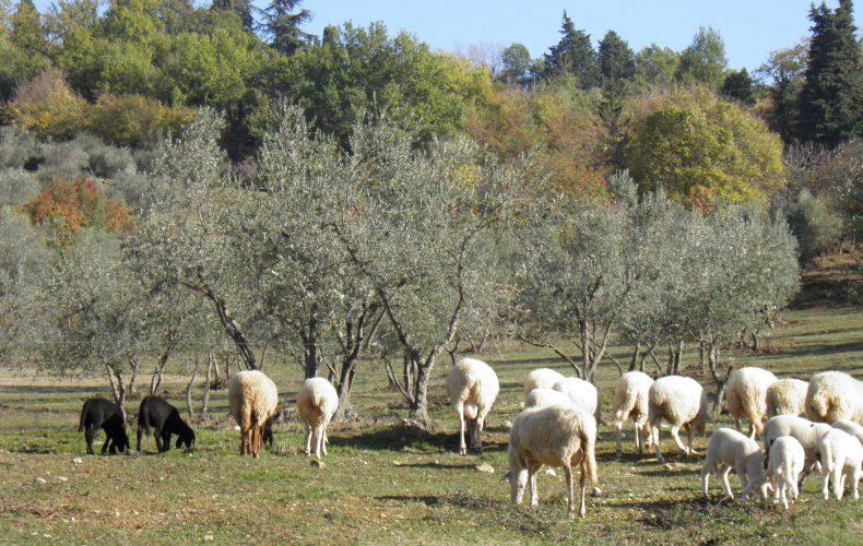 Appuntamento Vendita Diretta… un remind che annuncia la primavera…carne, pecora e anatre speciali!
