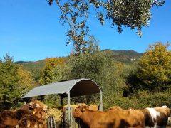Ottobre… prendiamo in contropiede l'autunno!