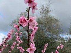 """La Valle del Sasso come le rondini… la new entry """"Tarticcia VdS"""" annuncia la primavera!"""