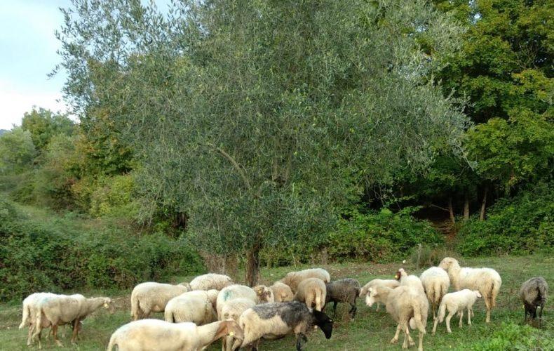Reminder di ottobre… anche la pecora per un autunno tutto da gustare!