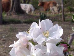 Data di Aprile… galline in brodo e tante bontà della Fattoria VdS!